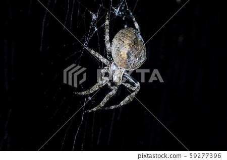 한국의 곤충 59277396