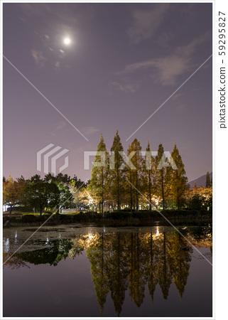 김해 연지공원 가을 야경 59295827