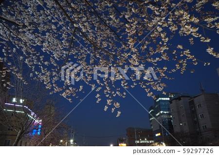 봄 밤 59297726
