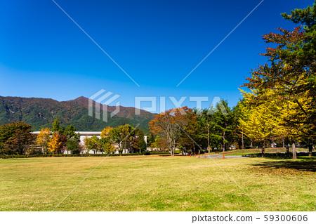 야마나시 현 가을 가와구치 미술관 잔디 광장 59300606
