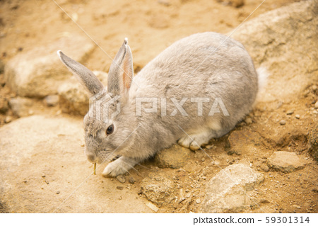 happy rabbit to enjoy food in nature bright morning     59301314