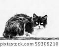 homeless shaggy black and white cat. Photo 59309210