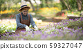 Middle aged asian woman gardener trimming plants in the garden 59327047
