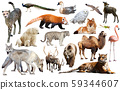 asia animals isolated 59344607