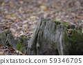 Green moss on an old tree 59346705