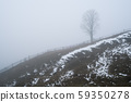 Spring landscape with a lonely tree 59350278