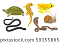 Cold-blooded Animals, Amphibians And Reptiles, Snakes, Snail Vector Illustration Set Isolated On 59355865