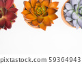 Collection of various colorful succulent echeveria plants in stone pots.  59364943