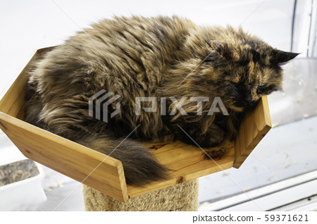 Domestic cat chilled in coffee shop 59371621