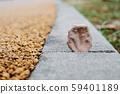 地磚縫隙的落葉 59401189