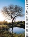 夕陽下小湖岸的樹 59401190