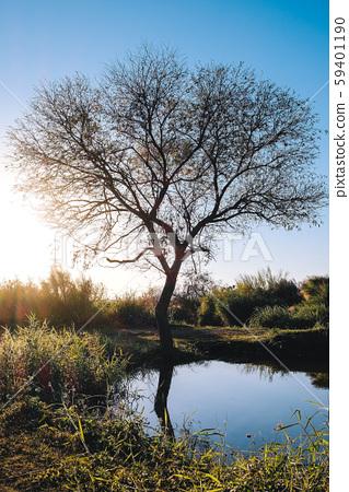Lakeshore tree 59401190