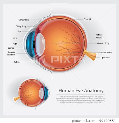 Human Eye Anatomy Vector Illustration 59409351