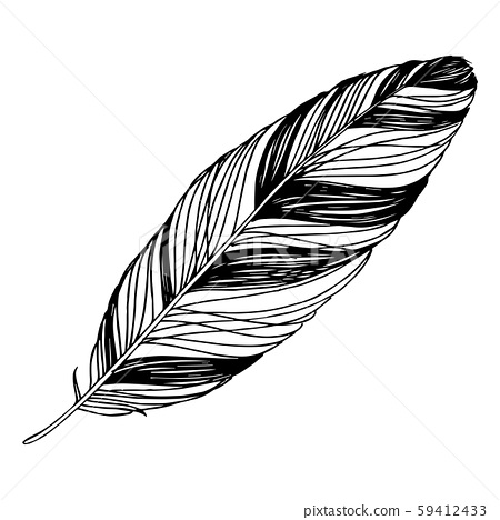Vector Bird feather from wing isolated. Black and white engraved ink art. Isolated feathers 59412433