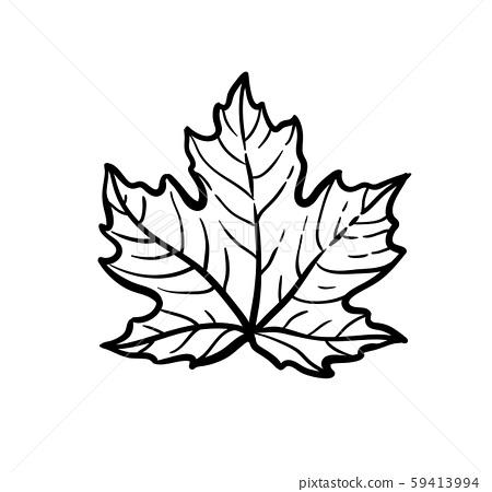 Ink sketch of maple leaf. 59413994