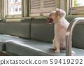Dog so cute inside a railway train wait for travel 59419292