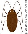 蟑螂的例證 59422630