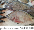 Fresh Fish Chilling on Ice, fresh fish sold in a 59436388