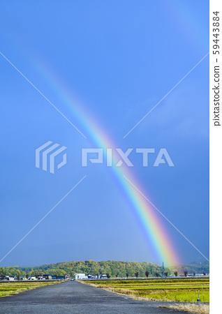 雨後的彩虹/農家路,稻田路,攝於11月,石川野美 59443884