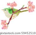 Warbler and Sakura 59452510