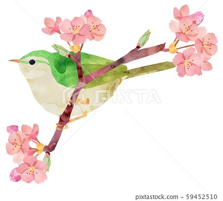 鶯和櫻花 59452510