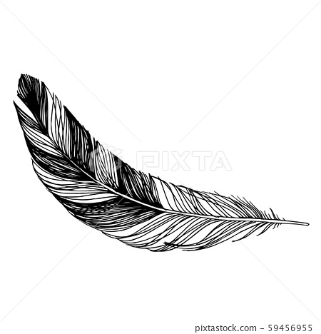Vector Bird feather from wing isolated. Black and white engraved ink art. Isolated feathers 59456955