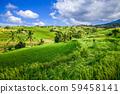Jatiluwih paddy field rice terraces, Bali, 59458141