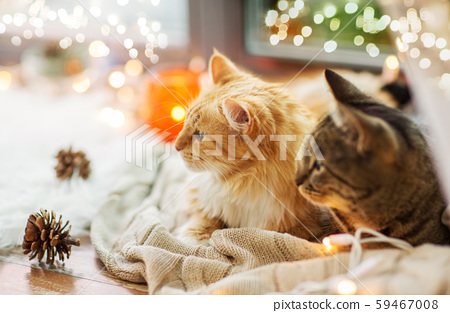 two cats lying on window sill with blanket at home 59467008