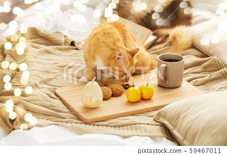 red tabby cat sniffing food on bed at home 59467011