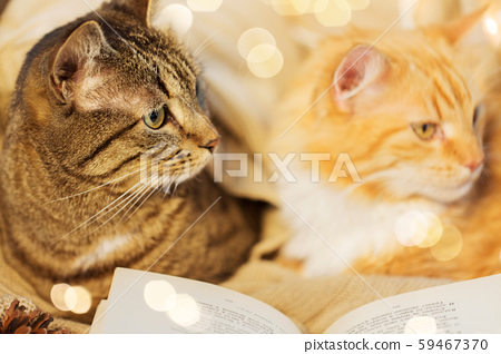 two cats lying on sofa with book at home 59467370