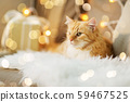 red tabby cat on sofa with christmas gift at home 59467525