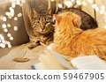 two cats lying on sofa at home 59467905