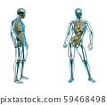 3d rendering illustration of skeleton bone anatomy 59468498