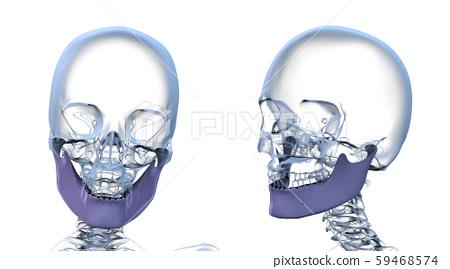 3d rendering illustration of jaw bone 59468574