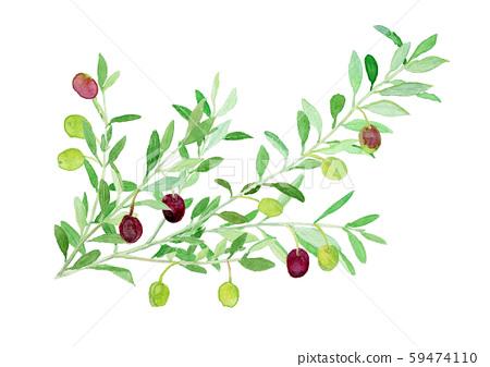 油橄欖木橄欖枝 59474110