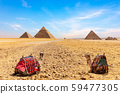 Camels at the foot of the Giza Pyramids, Cairo, Egypt 59477305