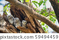 3 birds that live as families are located  in the 59494459