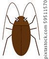 蟑螂的例證 59511570