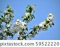 Mikaido blue sky and white flowers 59522220