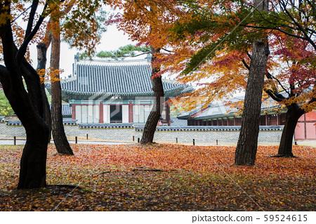Autumn in Changgyeonggung Palace 59524615