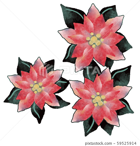 Poinsettia red christmas illustration material 59525914