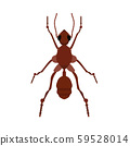 Ant small wildlife brown worker top view vector. 59528014