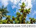 熱帶圖像藍天素材 59528503