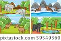 Background scenes of animals in the wild 59549360
