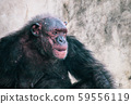 King Kong come out from hiding sit thinking alone  59556119