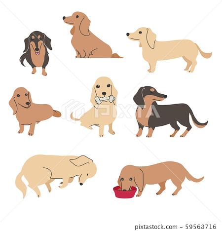 狗姿勢面部表情微型臘腸犬品種 59568716