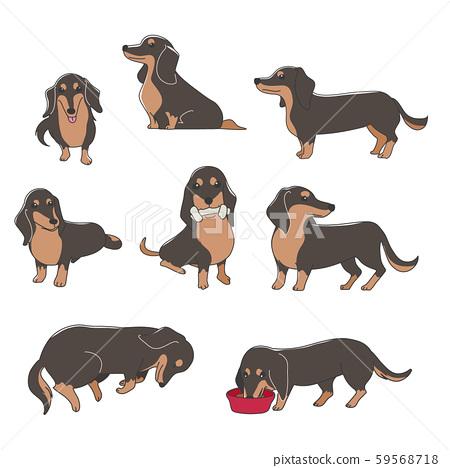 狗姿勢面部表情微型臘腸犬品種 59568718