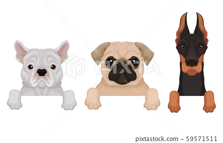 Pedigree dogs peep out. Vector illustration on a white background. 59571511
