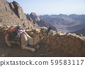 Camel for transporting turists and goods. Camel resting at the mountings with beautiful sinery 59583117
