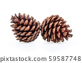 Pine cone on white background. 59587748